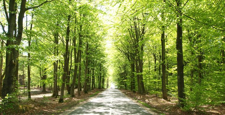 Skoven ved Houstrup