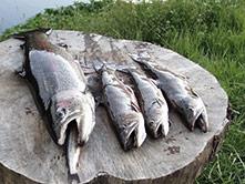 Billede af Vrøgum Fiskesø